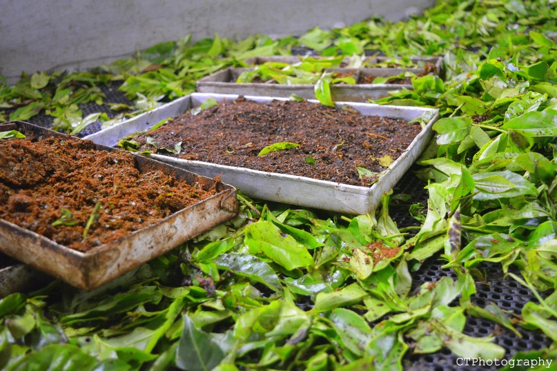 grinding tea - tea museum munnar kerala