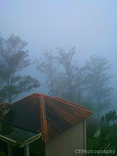 misty mornings at munnar